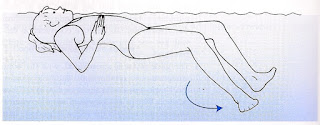 Viewed from the side an image of a female swimmer on their back pushing her arms down for the stroke and arrows on the legs indicating the circular motion in the kick