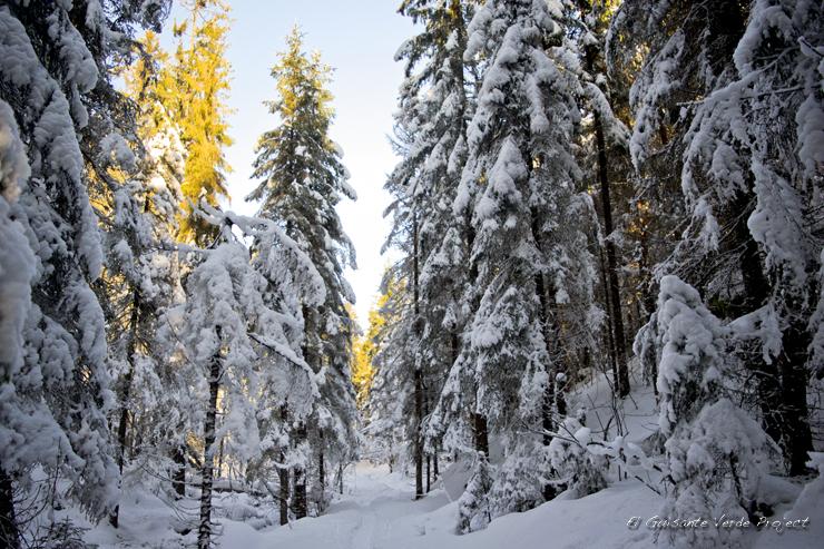 Bosques de Ullevalseter,  invierno en Oslo por El Guisante Verde Project