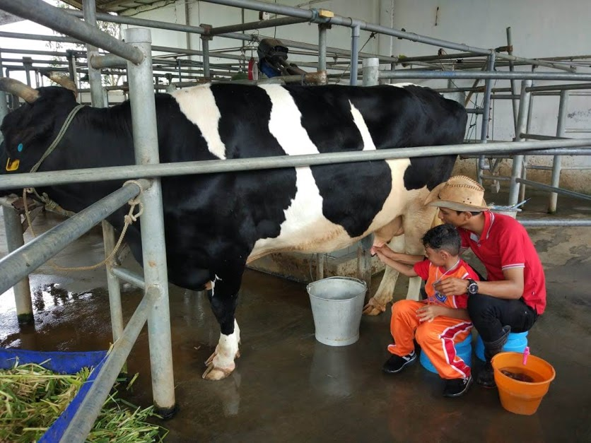 Belajar Asyik Dan Menarik Di Milkindo Kepanjen Sdi Surya Buana