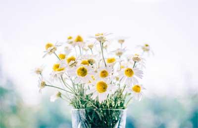beberapa tangkai bunga liar yang masih segar juga oke untuk mempercantik toples atau botol kaca bekas, jadi jangan takut bereksperimen, kadang yang sederhana, terbuang, dan tersia-sia itu sungguh cantiknya