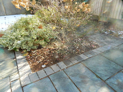 Toronto St. Clair West Village Fall Backyard Cleanup After by Paul Jung Gardening Services--a Toronto Organic Gardener