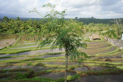 Un petit coin de paradis au coeur de l'Indonésie ✈
