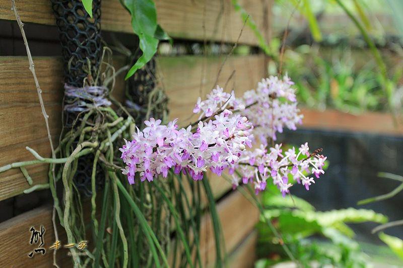 蘭科植物園|珍奇蘭種保育區|台南山上景點