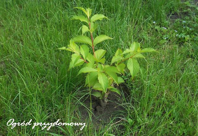 podsumowanie roku w ogrodzie, ogród przydomowy