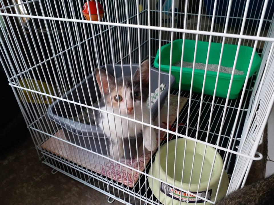 momo anak kucing tidak tidur di litter box