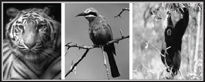 Persebaran Komunitas Fauna di Dunia Daerah Padang Rumput, Gurun, Laut, Tundra, Hutan Basah, Hutan Gugur dan Daerah Taiga
