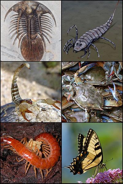 Fotografía de varios tipos de artrópodos que pueblan en suelo