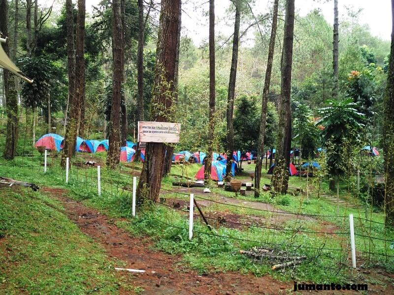 grafika cikole camping ground