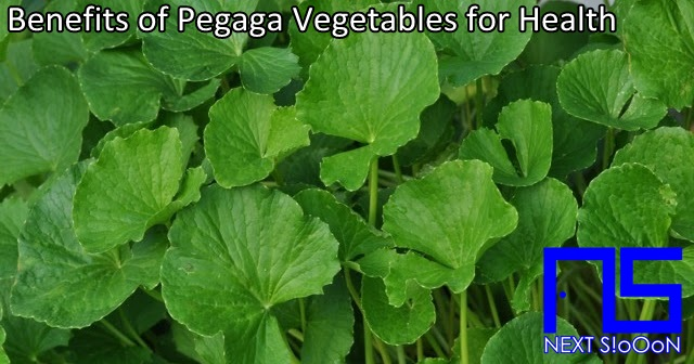 Centella Asiatica or Pegaga  Vegetables, What Is Centella Asiatica or Pegaga  Vegetables, Understanding Centella Asiatica or Pegaga  Vegetables, Explanation of Centella Asiatica or Pegaga  Vegetables, Benefits of Centella Asiatica or Pegaga  Vegetables for Health, Benefits of Centella Asiatica or Pegaga  Vegetables for the Body, Nutrition of Centella Asiatica or Pegaga  Vegetables, Vitamins for Centella Asiatica or Pegaga  Vegetables, Vitamins and Centella Asiatica or Pegaga  Vegetables Nutrition for Body Health, Get a Healthy Body with Centella Asiatica or Pegaga  Vegetables, Information about Centella Asiatica or Pegaga  Vegetables, Complete Info about Centella Asiatica or Pegaga  Vegetables, Information About Centella Asiatica or Pegaga  Vegetables, How the Nutrition of Vitamin Centella Asiatica or Pegaga  Vegetables is, What are the Benefits of Centella Asiatica or Pegaga  Vegetables for the Body, What are the Benefits of Centella Asiatica or Pegaga  Vegetables for Health, the Benefits of Centella Asiatica or Pegaga  Vegetables for Humans, the Nutrition Content of Centella Asiatica or Pegaga  Vegetables provides many benefits for body health.