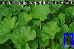 Benefits of Centella Asiatica or Pegaga  Vegetables for Health