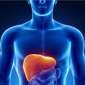 Cara Mudah Membuat Obat Hepatitis B Dari Tanaman