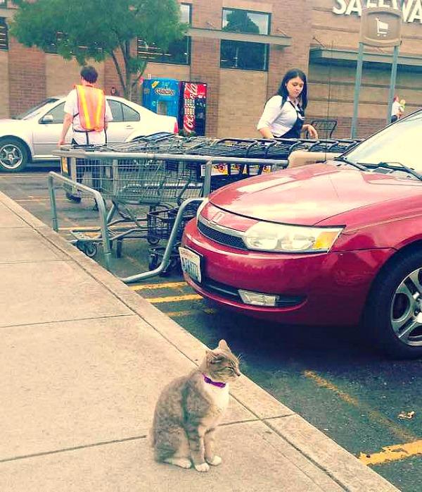 store cat portland oregon