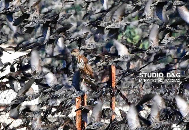 τεράστια μαύρα πουλιά βίντεο