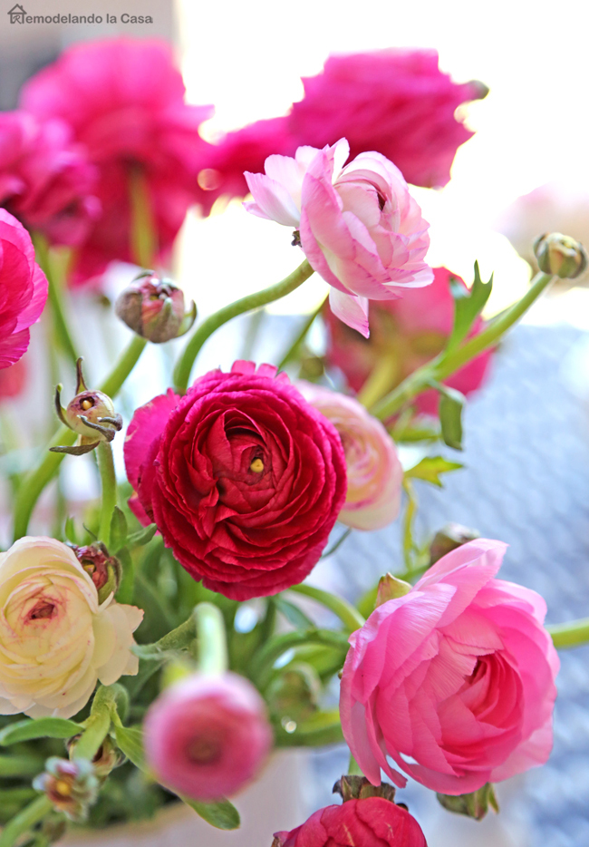 pink ranunculus to bring a good pop of pink to your Easter table