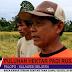 VIDEO: Akibat Cuaca Buruk, Puluhan Hektar Padi Rusak di Palopo