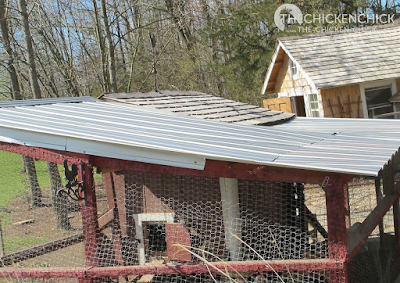 We replaced the damaged roof and put some of the fallen limbs to good use in the run this spring. The plastic, corrugated roofing was replaced with metal.