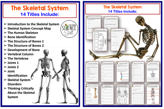concept map skeletal system diagram dodge ram wiring 2005 amy brown science human body the muscular and as stated above this set includes only integumentary systems specific titles can be seen in images below
