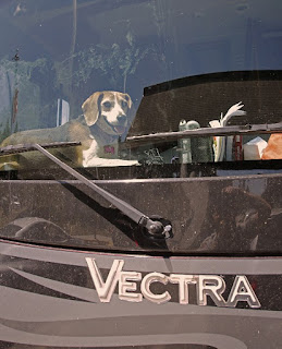dog looking out of a  motorhome windshield