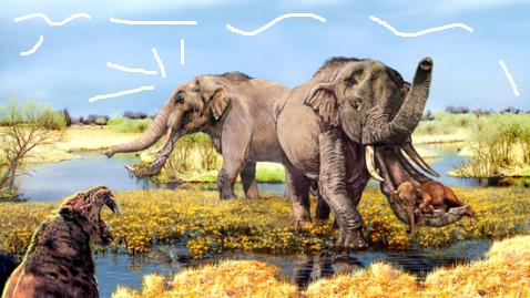 RAKSASA! Platybelodon, Gajah Purba Yang Mirip Monster