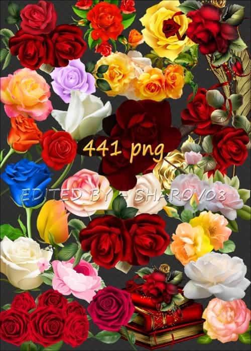 تحميل 441 صورة بخلفية شفافة PNG للورود والأزهار