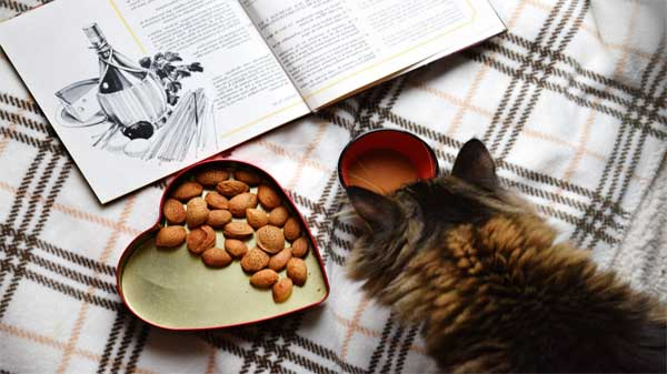 healthy eating for cats