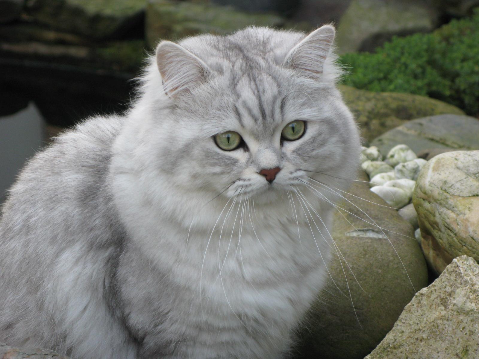 cat afraid of storms