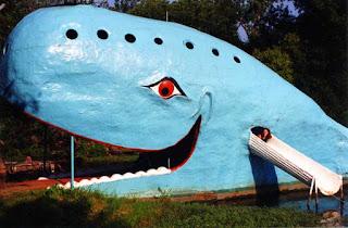 balena albastra blue whale copii iasi timisoara
