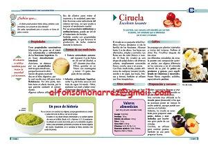 Libros dvds cd roms enciclopedias educaci n preescolar primaria secundaria preparatoria - Anemia alimentos recomendados ...