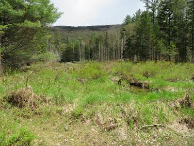 Mountain Wandering Chickenboro Exploring 5 21 19