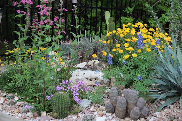 Cactus Spring Flowers