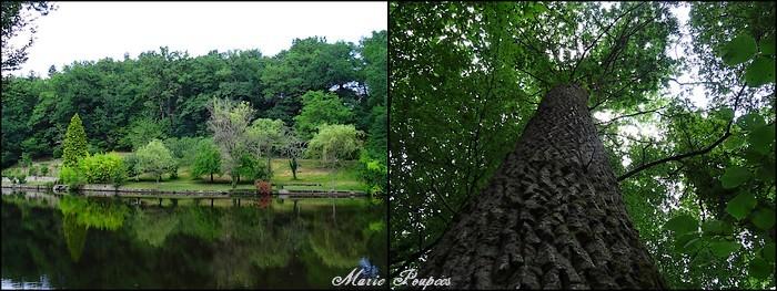 Feytiat étang de la Vergne