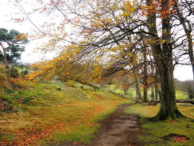 Autumn scenery while hiking on Corstorphine Hill, Edinburgh, Scotland