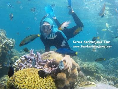 gambar wanita jilbab snorkeling di karimunjawa