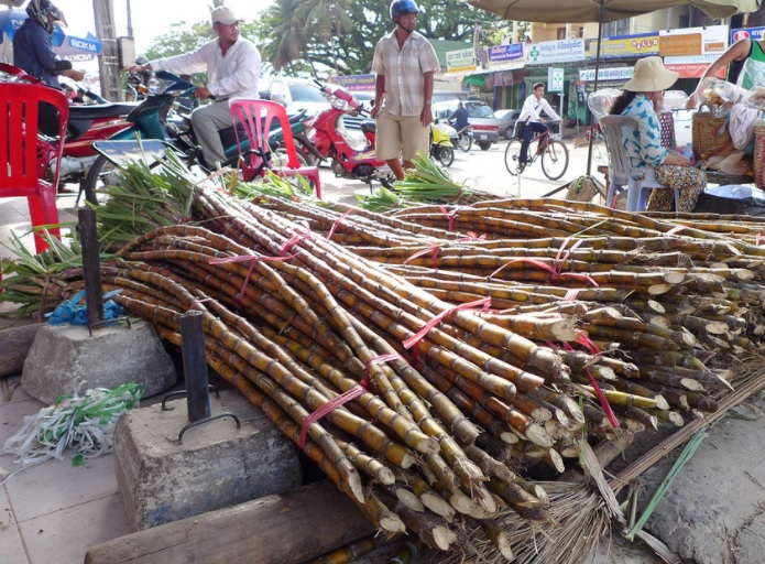 Stalks of sweet sugarcane