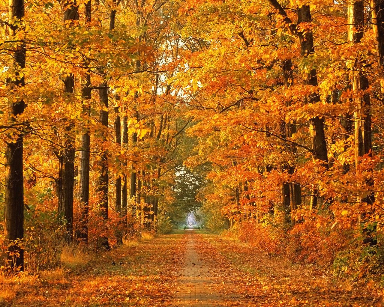 fun fall wallpaper - photo #5