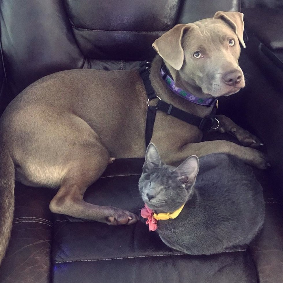 Woman Drives 10 Hours to Adopt Blind Kitten, the Kitty Bonds with Her Rescued Dog