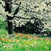 Top 5 bệnh dễ mắc vào mùa xuân