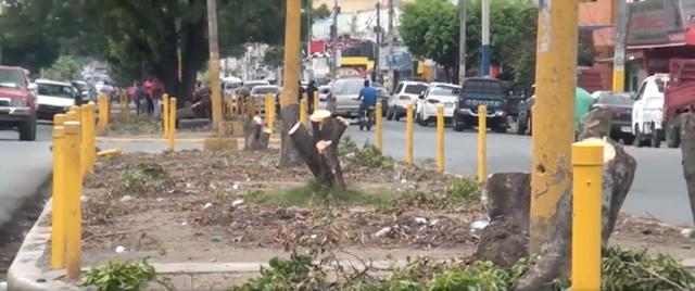 Video: Alcaldía realiza corte de árboles en avenidas de SFM