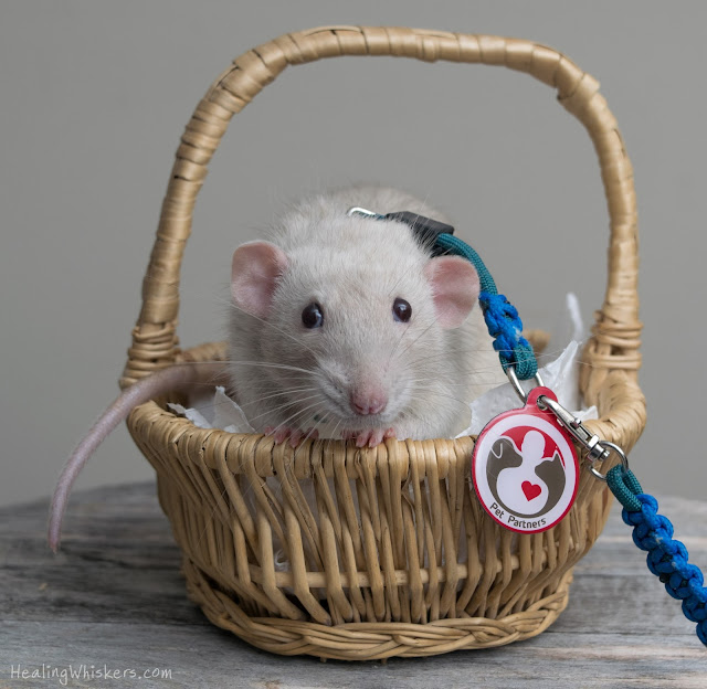 Oliver in a basket