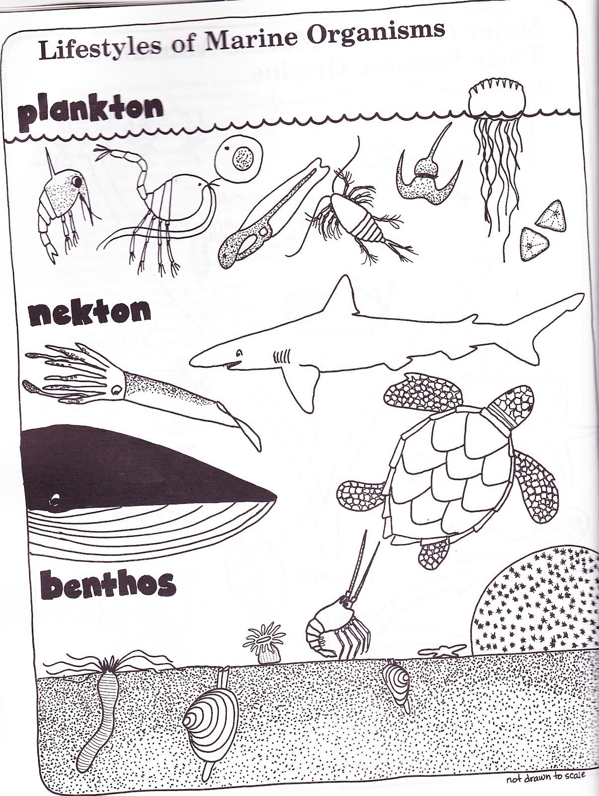 the marlowe bookshelf: The Seaside Naturalist
