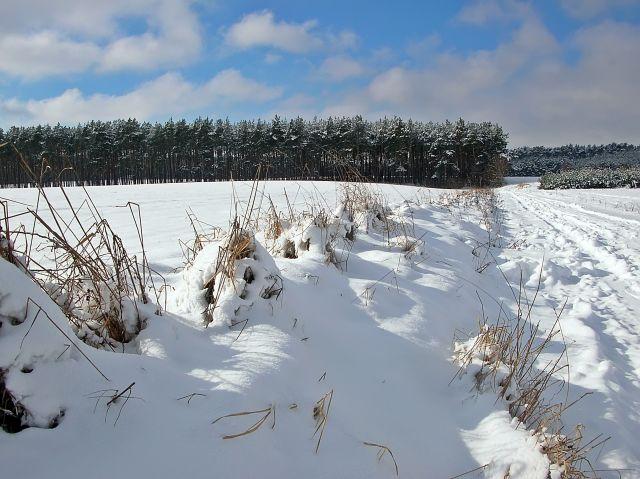 las, pole, droga, śnieg, zima, mróz