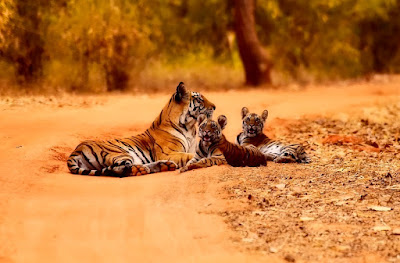 Jim Corbett Natinoal Park - First National Park in Asia-Wildlife Tour India