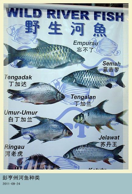 I love 2 ee ...... ...... ......: 彭亨州河魚