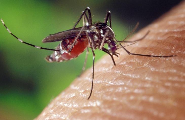 Suben a 22 las muertes por dengue en República Dominicana
