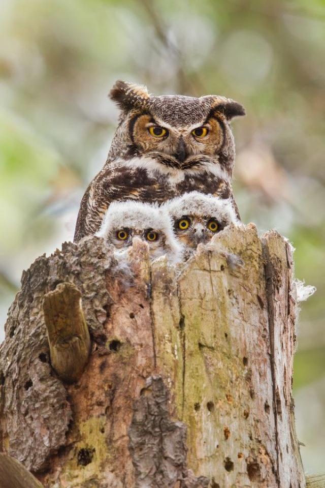 it 100 most valuable images of owls. all times and peoples