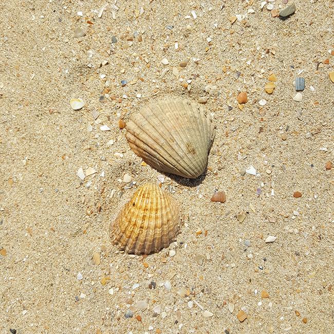 Spain, Spanien, Espana, Strand, beach, playa, Muscheln, seashells
