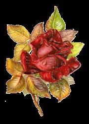 flower victorian clip rose flowers clipart leaves die cut antique roses floral antiqueimages distressed decoupage lovely