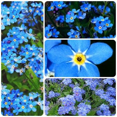 Elegancki, dostojny a przy tym swojski i klimatyczny - niebieski kolor w ogrodzie.