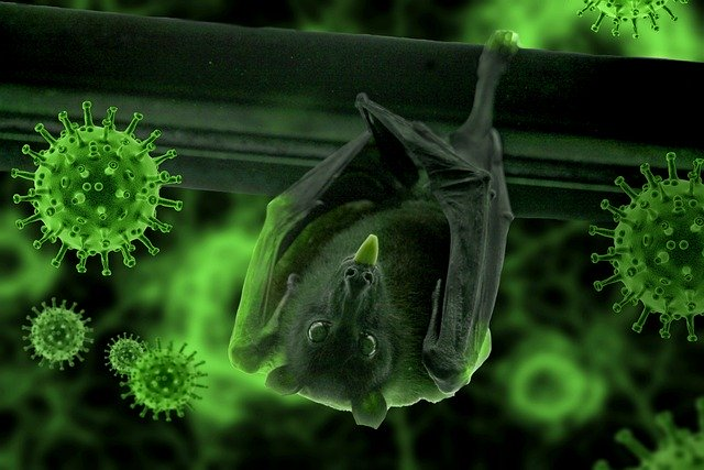 Have bats caused our pandemic?.. Environment expert resolving the controversy