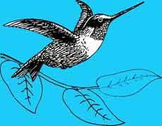 Algoritma google humingbird dapat membuat situs jadi baik